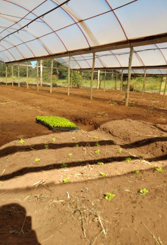 Bewerkte grond