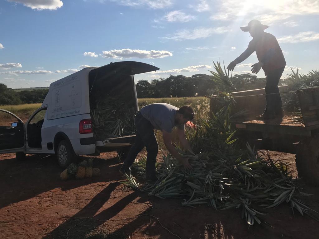 Ananasstekken laden